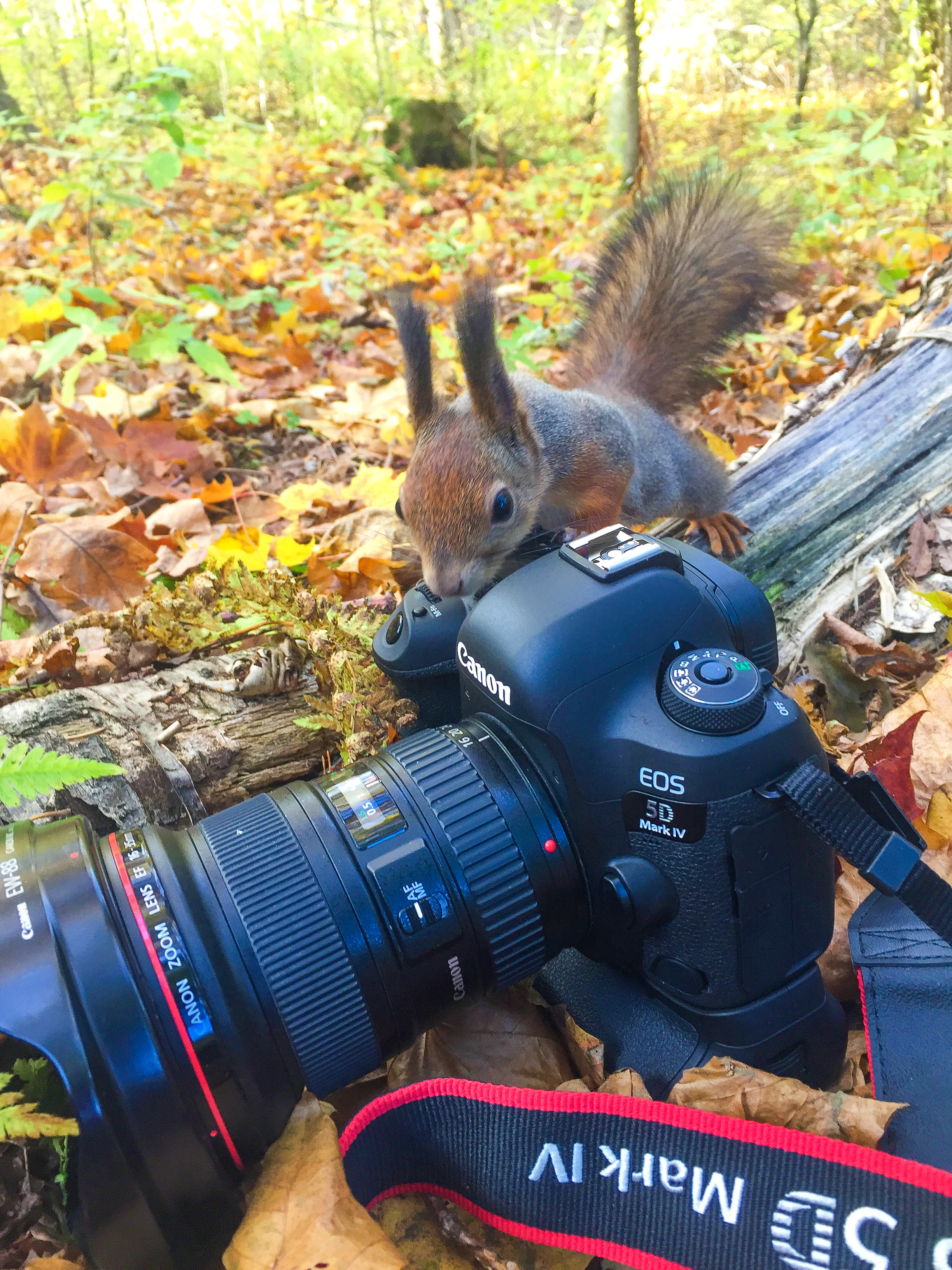 Orava tutustumassa Canonin uutuus kameraan.